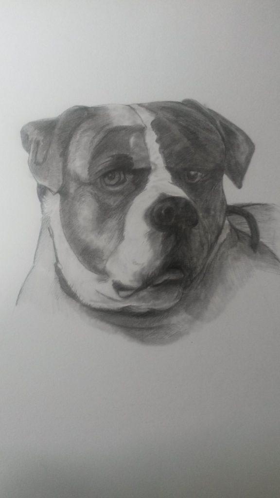 Hondenkop portrettekening pentekening jeroen middelkamp jmillustraties